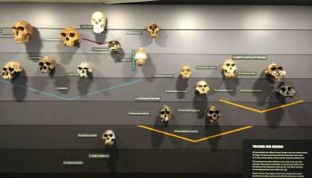 HumanEvolution